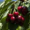 Il premio alla miglior azienda agricola incorona Agios Loukas, cooperativa agricola di Rachi, per la sua produzione di ciliegie sul monte Olimpo,di alta qualità. Il 90% della produzione viene esportata.Tel: +30.235.1098711