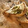 Il Thalassaki di Tinos ha vinto il premio come miglior ristorante tipico. Si tratta di una taverna che propone soprattutto frutti di mare e verdura. I piatti sono a base di prodotti locali, preparati con fantasia e creatività. E' gestito dalla cuocaAntonia Zarpa con suo marito Aris Tatsis.Thalassaki è nella baia diYsternia, aTinos. Tel: +30.22830.31366
