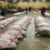 """Vendita del tonno al celebreTsukiji Market, il più grande mercato del pianeta per il pesce, prossimo al trasloco.""""Dà un'idea del lavoro che c'è alla base per sfamare cotanta umanità"""", scrive per noi Gianni Revello, appassionato di gastronomia e arte contemporanea(fotobestlivingjapan.com)"""