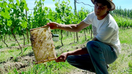 Bees have a crucial role atBodega Chacraand, in general, in biodynamics applied to viticulture