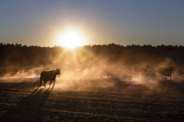 Le mandrie al pascolo, i gauchos a cavallo, le infinite pianure delle pampas argentine
