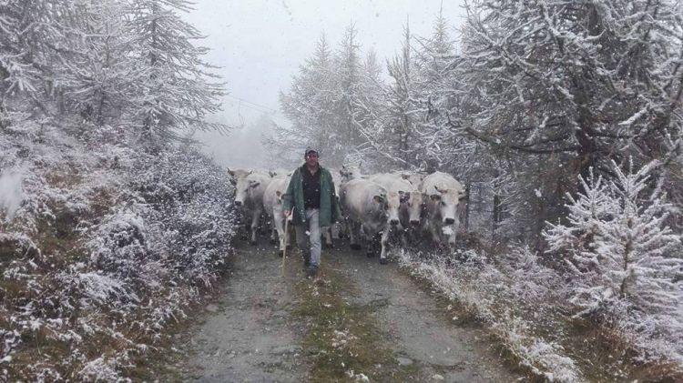 Winter breeding in Lucania