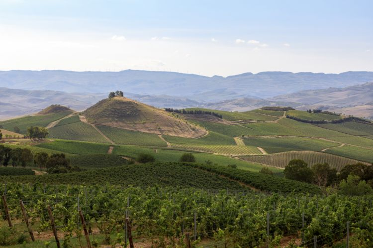 Le colline di Regaleali (foto di Benedetto Tarantino)