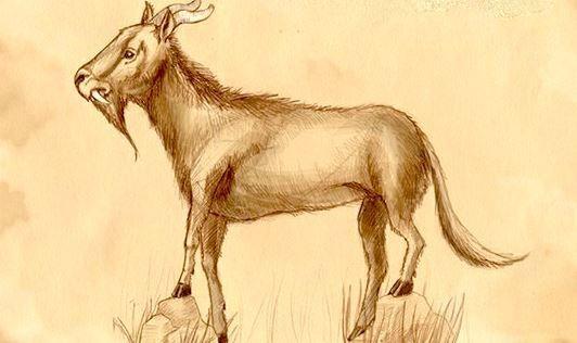 Dahu, leggendario animale con le zampe asimmetriche