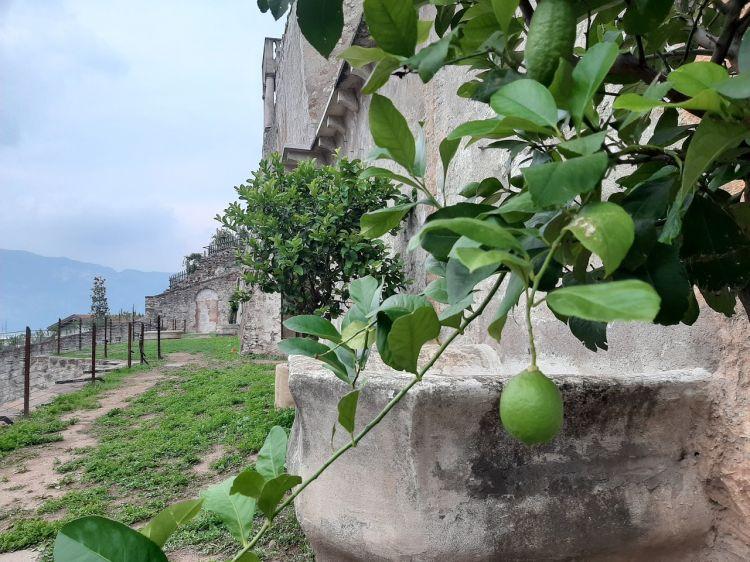 Giardino dei Ciucioi,Lavis