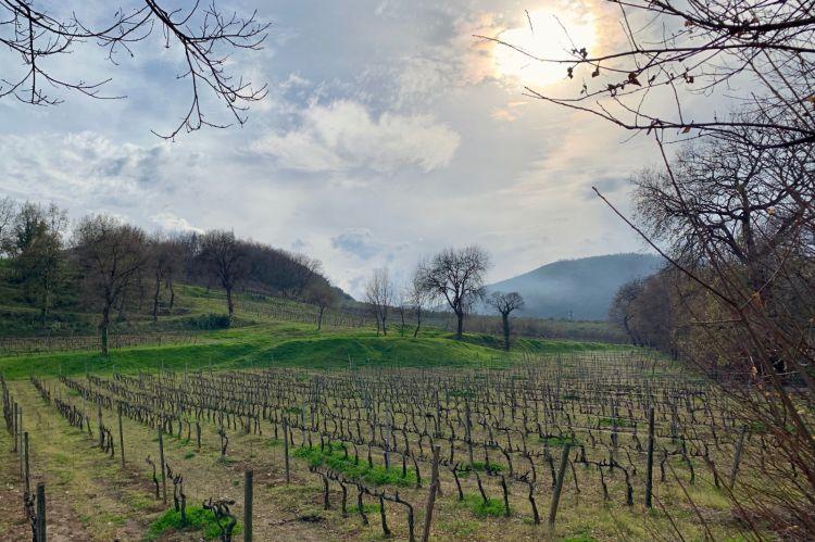 Le vigne del Montevetrano