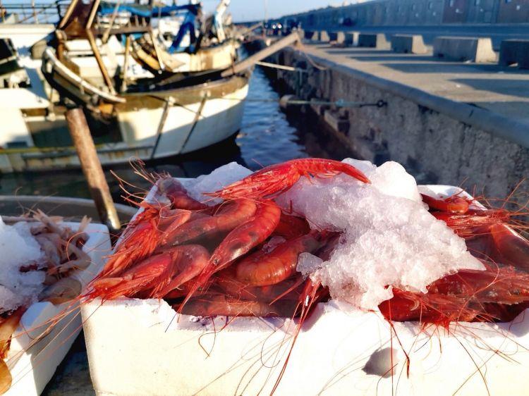 Abbiamo accompagnato il cuoco capitano al porto di Licata per ritirare i gamberi appena pescati dal peschereccio dei cugini di Giovanni