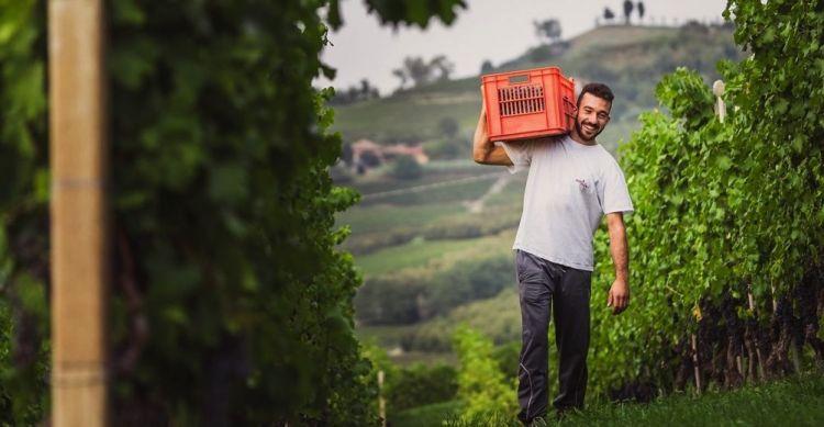Sergio Abrigo durante la vendemmia