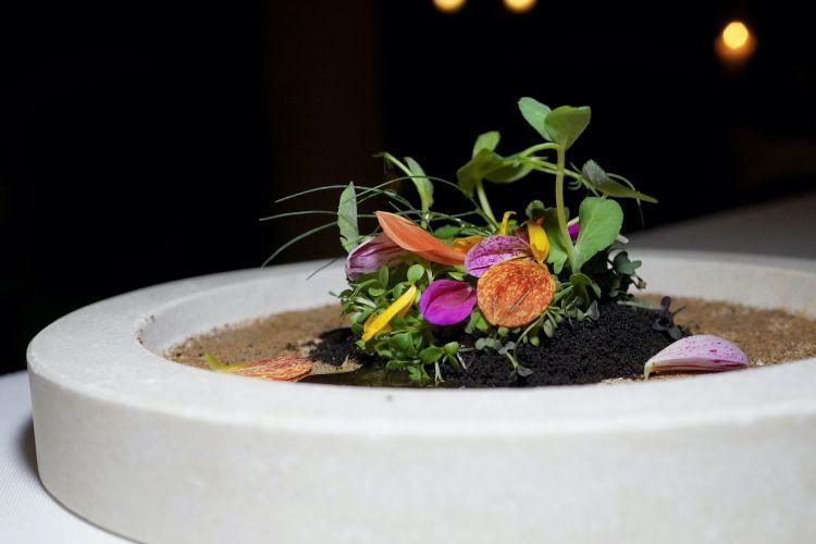 Dalla terra al piatto: verdure fermentate, germogli, terra al malto d'orzo, salsa di porcini fermentati e di sedano rapa bruciato