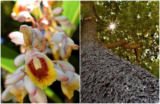 I giardini del Mirazur aiutano gli ospiti che vi arrivano a staccarsi dal mondo esterno e immergersi in uno di contemplazione. Qui il fiore dello zenzero e un albero monumentale e centenario di avocado