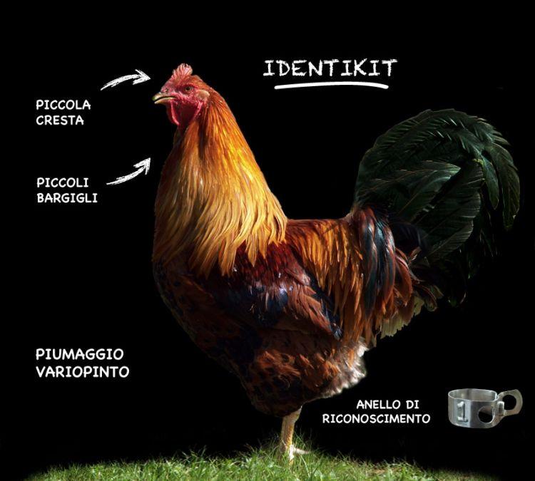 L'identikit del Cappone di Morozzo (fotocapponedimorozzo.it)