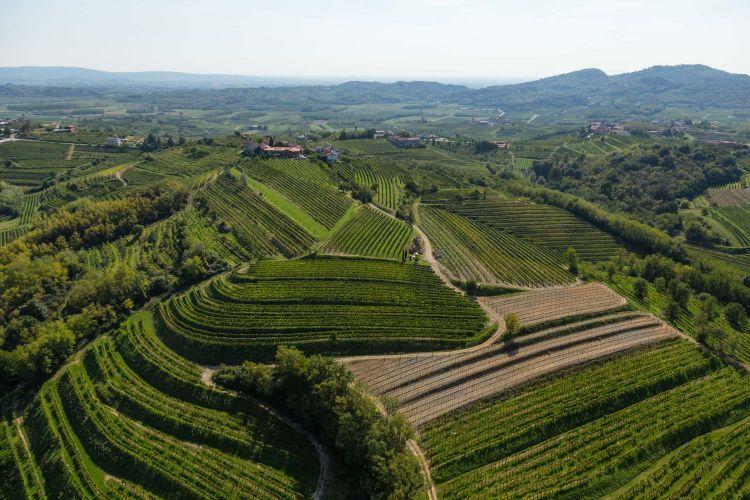 Colline del Collio sloveno pettinate a vitigno