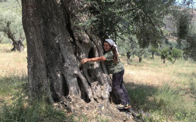 Gli ulivi hanno fino a 800 anni di vita