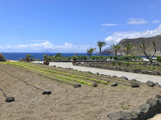 Part of the vegetable gardens at Therasiasupply most of the vegetables used by Guidara