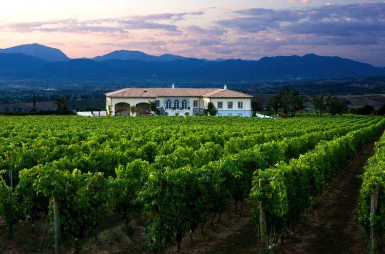 La tenuta di Montefalco: qui l'azienda ha 20 ettari vitati