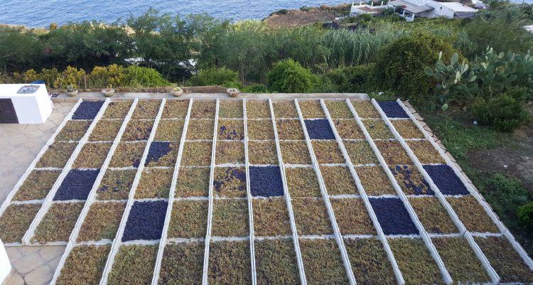 La produzione sull'isola di Salina: si punta alla qualità