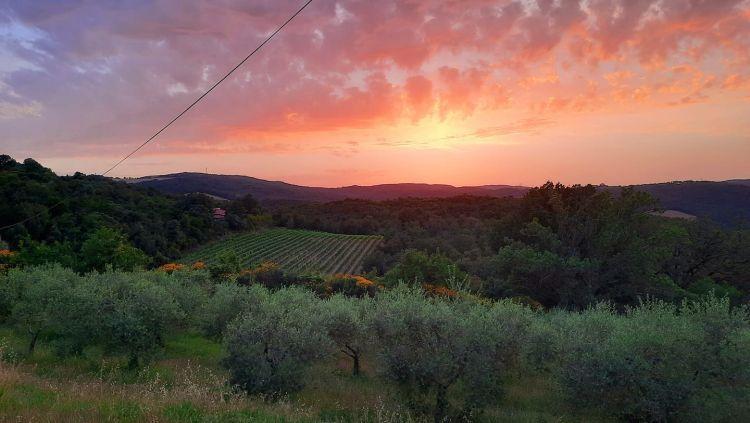 Ulivi, vigneti e uno splendito tramonto sul Palagione