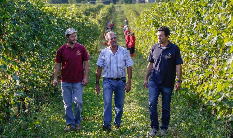 Paolo, Valerio e Fabio Zenato nelle vigne