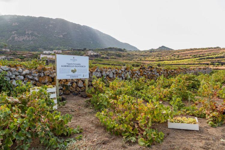 Il giardino pantesco di Pantelleria