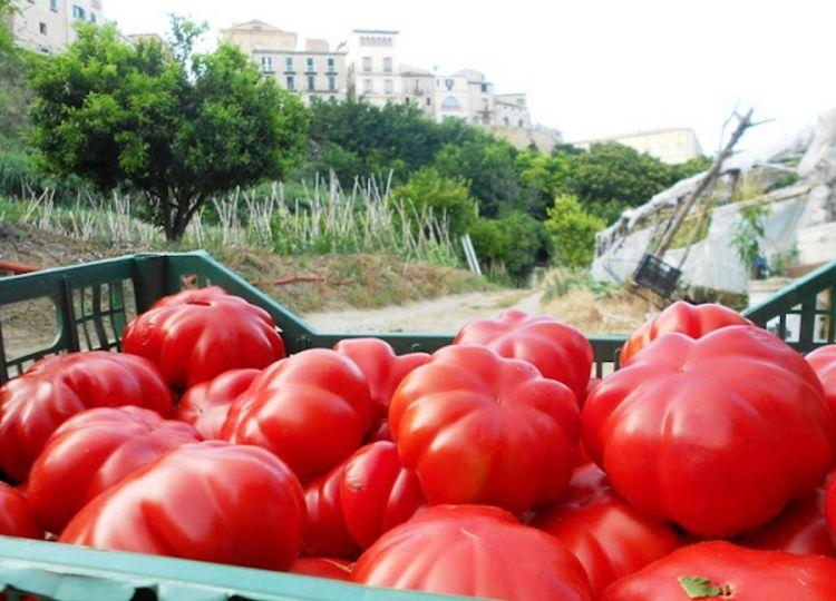 I pomodori mezzotempo, tipici di Vasto in Abruzzo e imprescindibili nel brodotto tra la stessa Vasto e San Salvo