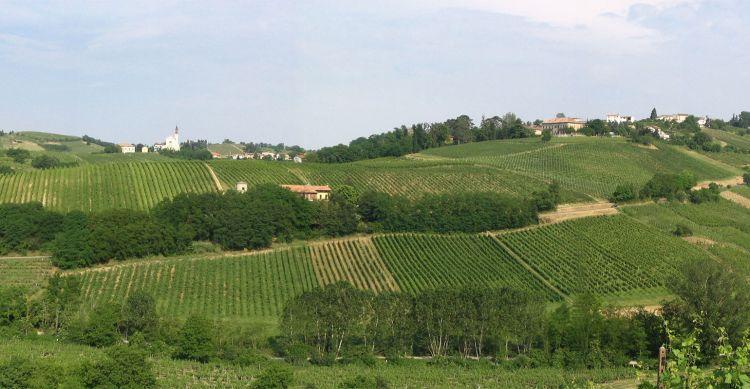 Tenuta Mazzolino si trova a Corvino San Quirico