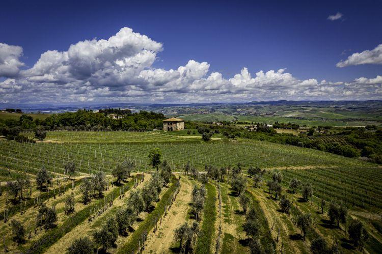 Una splendida panoramica dei vigneti a Montalcino