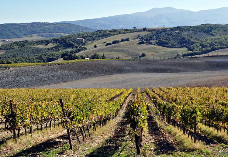 Un bel paesaggio sui vigneti della Maremma Toscana