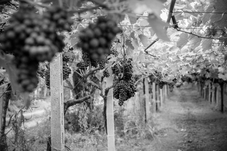 Montepulciano d'Abruzzo per il Rosso Tullum