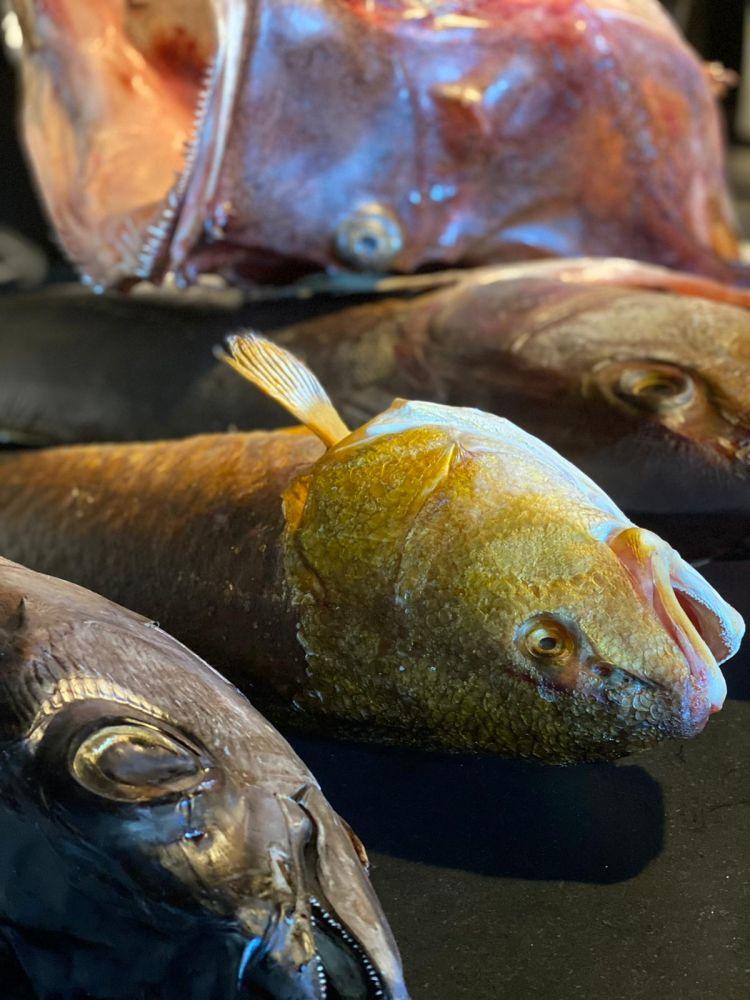 Pesci maturati da Luca Abbadir e Moreno Cedroni