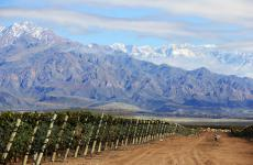 The vineyards of Zuccardi - Valle de Uco, in the background, the majestic Andes