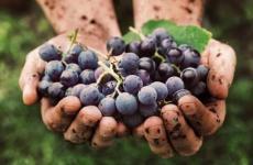 L'Associazione Produttori del Ruchè di Castagnole Monferrato conta 21 aziende eil 90 dell'intera denominazione