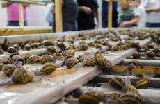 L'allevamento lumaca madonitadiCampofelice di Roccella, Palermo
