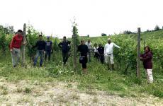 Alcuni dei dipendenti di Villa Sparina aMonterotondo di Gavi (Alessandria), impegnati in vigna