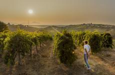 Valentina Di Camillodella Tenuta I Fauri, nelle vigne di proprietà a Francavilla (Chieti)