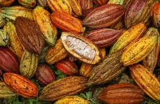 Premiato l'impegno di Valrhona a favore della sostenibilità e della biodiversità. Qui una foto tratta del loro profilo facebook, con questo commento: Si sente spesso parlare di tre varietà del cacao: Criollo, Forastero e Trinatario. Ma è importante non limitarsi a queste tre perchè la realtà è molto più complessa. Nel corso dei secoli si sono sviluppati molti incroci naturali tra gli alberi del cacao. Oggi è comune trovare diverse varietà con caratteristiche tipiche all'interno di una singola piantagione. Ad esempio il cacao della piantagione Millot è un buon esempio di diversità genetica