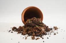 Tierra de Cacao è il signature dish di CarlosGarcía, chef venezuelano che si propone al ristorante Alto di elevare la cucina a elemento identitario per il riscatto del suo Paese