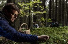 Alessandro Gilmozzi impegnato nella raccolta nei boschi