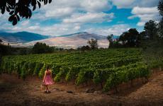 Nell'incontro con il Consorzio Tutela Vini Etna Doc è stato spiegato il valore del territorio etneo