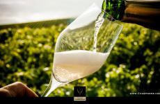 A glass of Champagne in the vineyard: our virtual journey begins