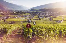 Sole, aria tersa, un paesaggio da favola: un vigneto in Svizzera. Identità vi guida alla scoperta di alcune chicche da non perdere, prima di otto puntate